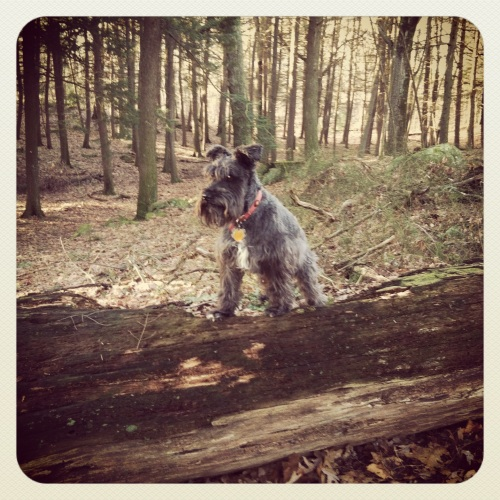 hike in the woods with Wolfgang, outdoor explorer extraordinaire